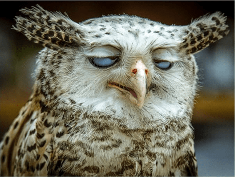 a list of unflattering animal photos
