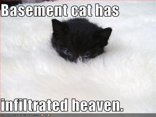 basement cat cute heaven kitten - 3420957696