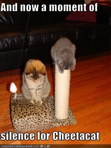murder,Sad,scratching posts