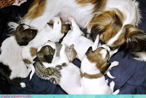 dogs puppy squirrel - 3421644032