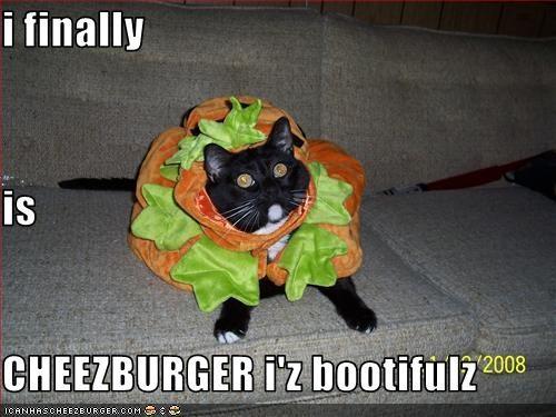 Cheezburger Image 3422036736
