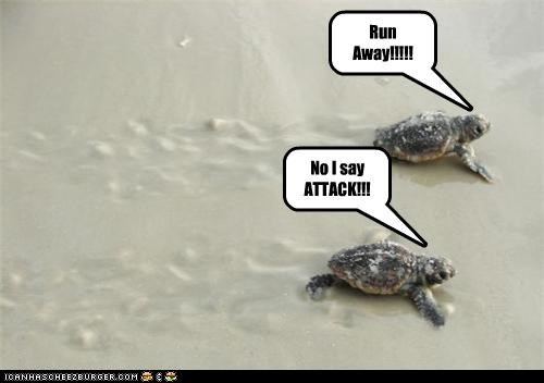 Run Away!!!!! No I say ATTACK!!!