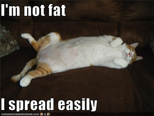 fat Fluffy - 3422526976
