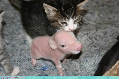 friends,kitten,piglet