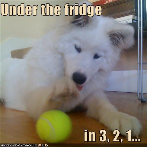 ball fridge samoyed - 3422878208