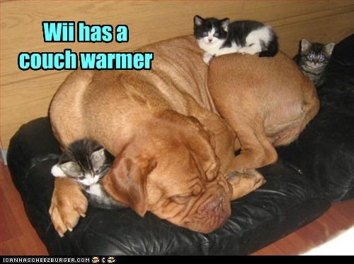 boxer couch lolcats sleeping - 3423036928