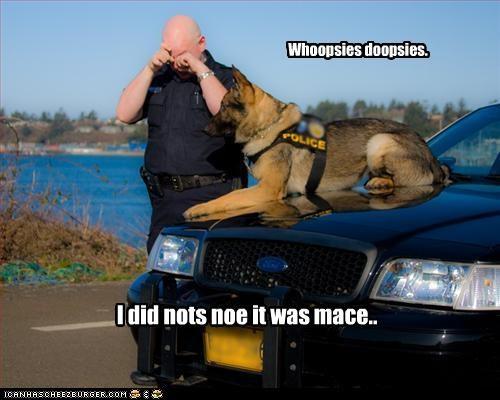 german shepherd mace mistake oops police - 3423058176