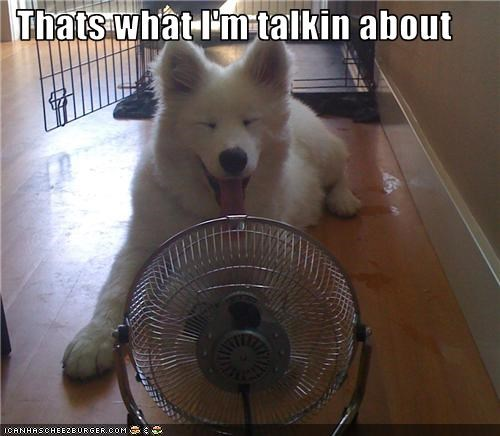 cool,fan,happy,samoyed