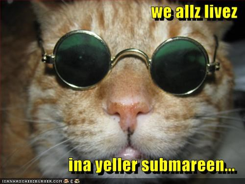Cheezburger Image 3423708672