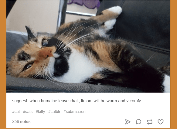 funny cat suggestions