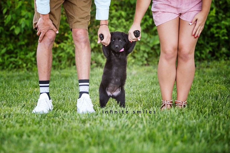 cute gender reveal photo shoot for a new puppy