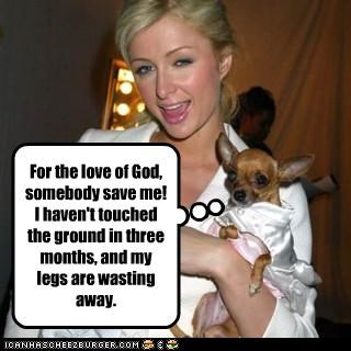 abuse dogs help paris hilton - 3424797440