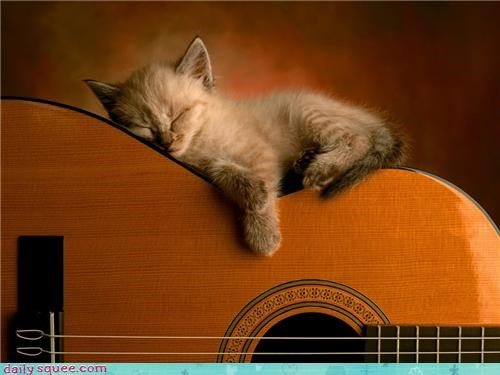 jeff bridges kitten sleep - 3425289472