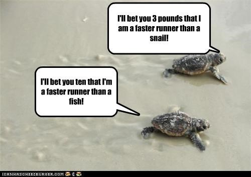 I'll bet you 3 pounds that I am a faster runner than a snail! I'll bet you ten that I'm a faster runner than a fish!