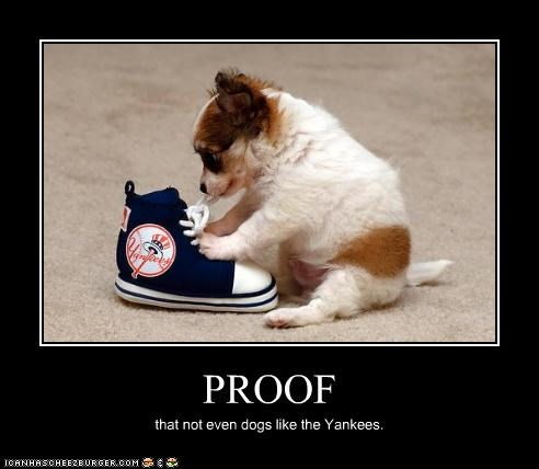 PROOF that not even dogs like the Yankees.