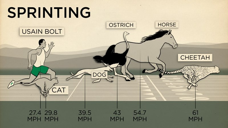 comparing physical abilities of human vs. animals