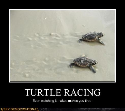 TURTLE RACING Even watching it makes makes you tired.