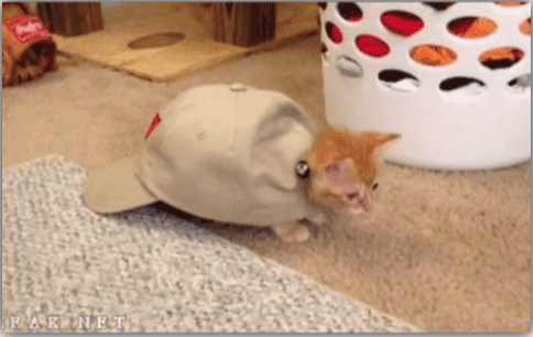 a funny list of cats thinking they are turtles