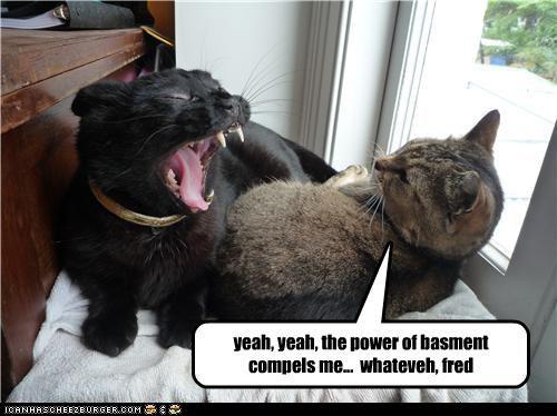 annoying basement cat friend - 3428631040