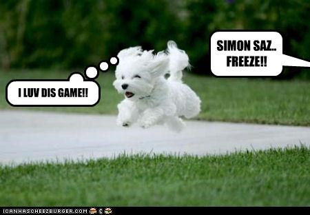 bischon frise outside running simon says