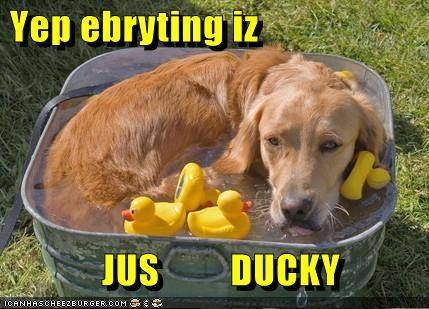 golden retriever,rubber ducks,washtub,water