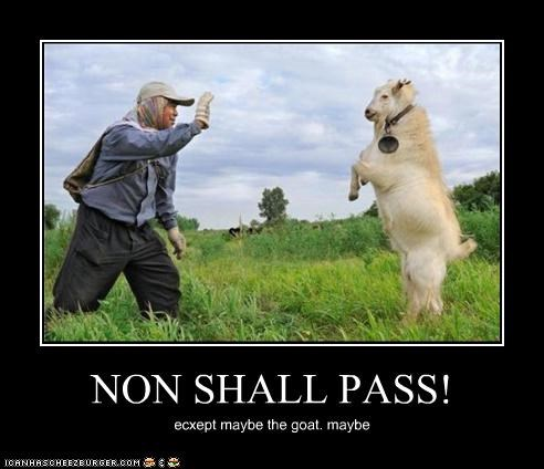 NON SHALL PASS! ecxept maybe the goat. maybe
