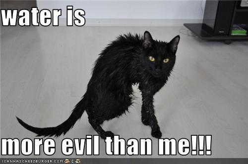 basement cat bath do not want evil water wet - 3429402112