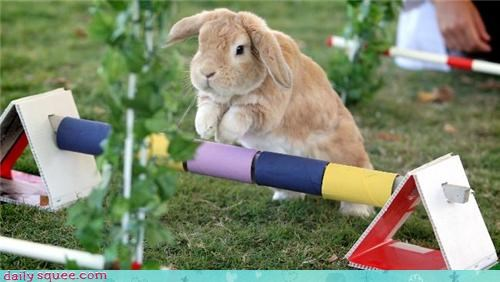 action,bunny,sport