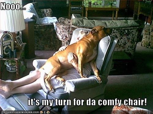 comfy chair,disagreeing,human,mixed breed,my turn,no,protesting,rottweiler