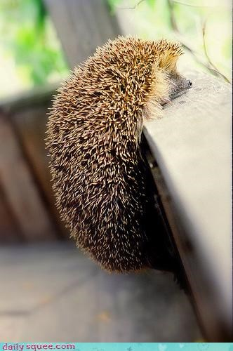 3-2 cute hedgehog - 3430731776