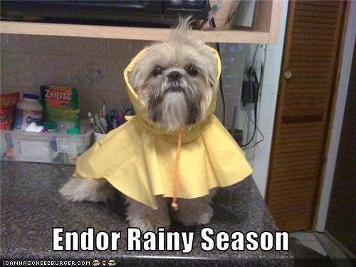 endor,ewok,rain,slicker,star wars,whatbreed