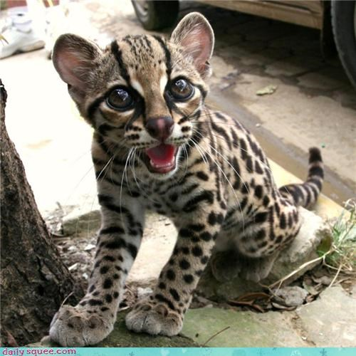 cute face kitty - 3431351808
