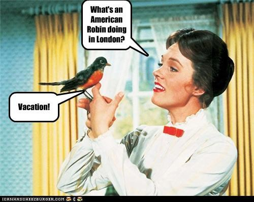 What's an American Robin doing in London? Vacation!
