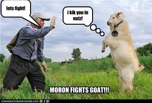 lets fight! i kik you in nutz! MORON FIGHTS GOAT!!!