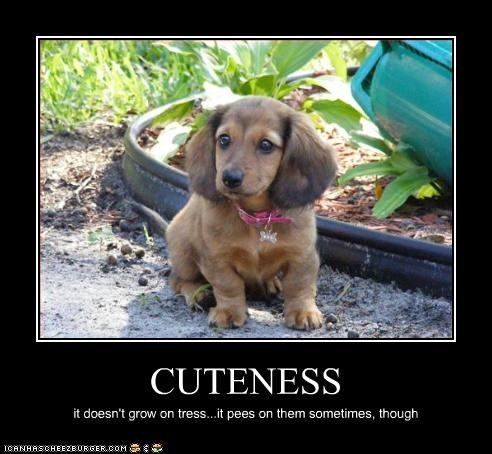 CUTENESS it doesn't grow on tress...it pees on them sometimes, though