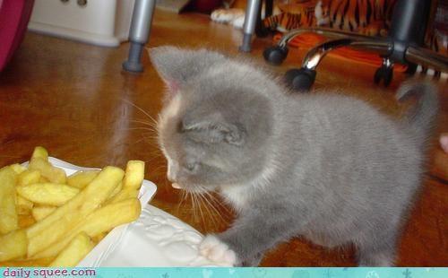 kitten nerd jokes noms - 3432353280