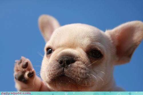 adorable face puppy - 3432430080