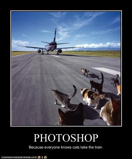 PHOTOSHOP Because everyone knows cats take the train.