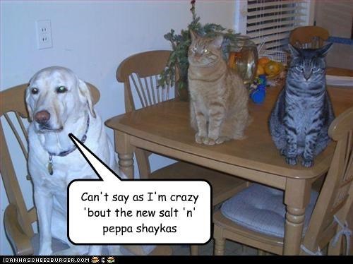 kitchen labrador lolcats table worried - 3434186496