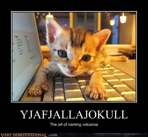 Cats helper cats hilarious news office assistant volcanos - 3434517248