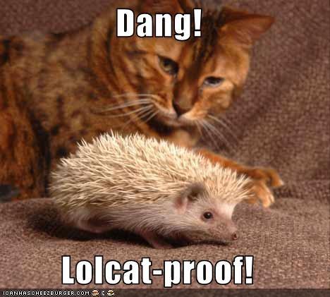 lolhedgehogs,oh noes