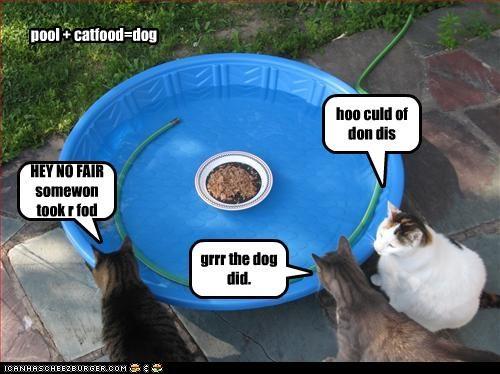 HEY NO FAIR somewon took r fod hoo culd of don dis grrr the dog did. pool + catfood=dog