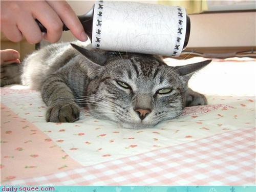cat cute face - 3436207872