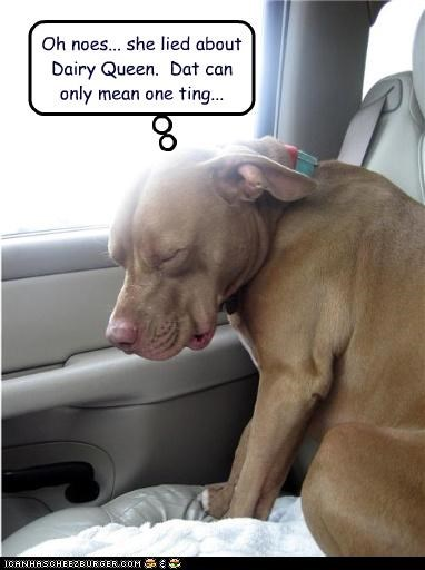 car,dairy queen,lie,pit bull,scared