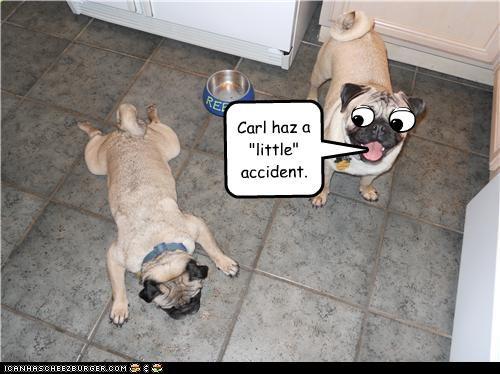 "Carl haz a ""little"" accident."