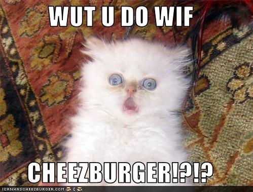 Cheezburger Image 3436833536
