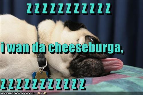 Cheezburger Image 3436959232