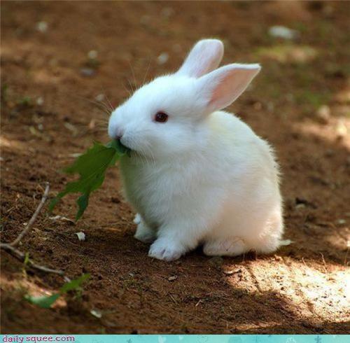bunny noms rabbit - 3437076736