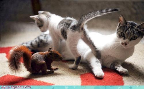 kitten photography squirrel - 3437193728