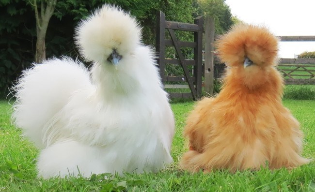 photos of fluffy animals